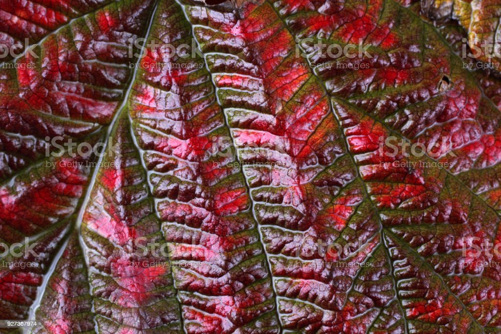Autumn leaf - Royalty-free Autumn Stock Photo