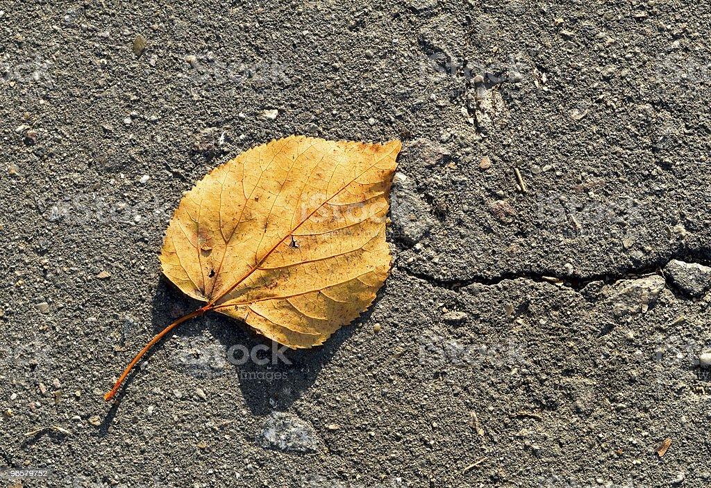 autumn leaf - Royalty-free Achtergrond - Thema Stockfoto