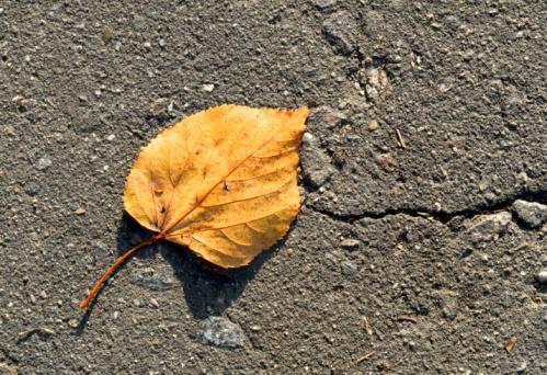 Autumn Leaf Stockfoto en meer beelden van Achtergrond - Thema