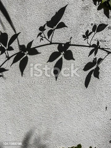 Abstract background of the shadows of autumn leaves across a textured stucco wall