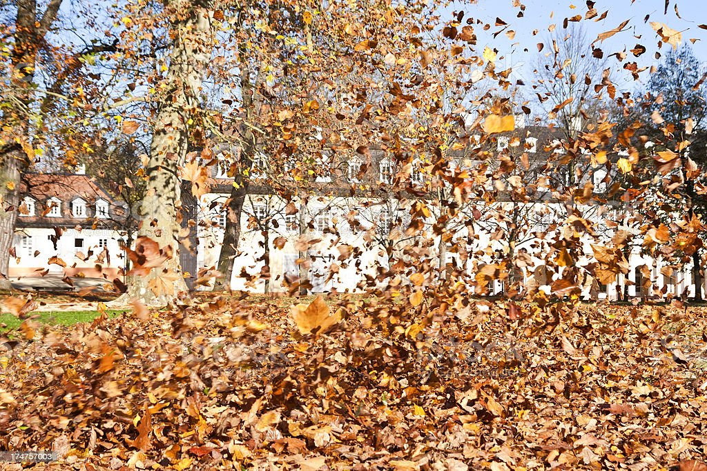 Autumn Leaf Storm stock photo