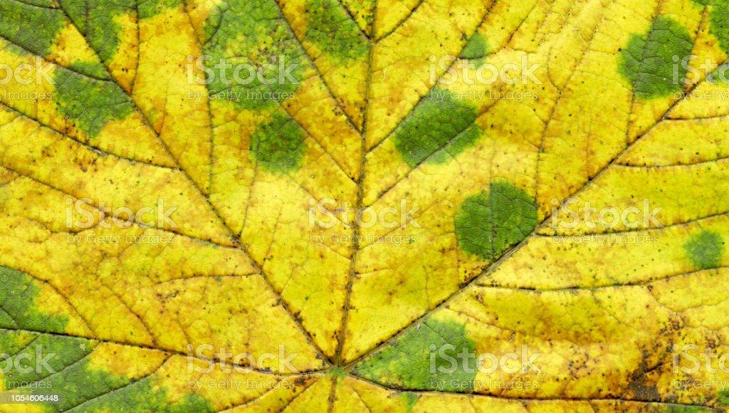 Autumn leaf texture background stock photo