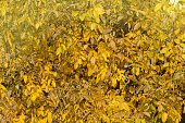 Colorful beautiful background of fallen leaves. Autumn leaves lying on the ground. Sunny autumn background