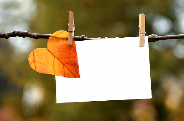 autumn leaf with card - love stock photos and pictures