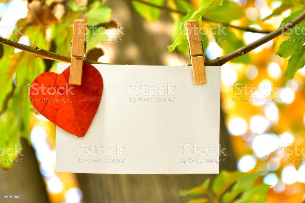 Autumn leaf with card stock photo