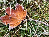 Frosty autumn coloured leaf dropped to the ground in grass heralds winter