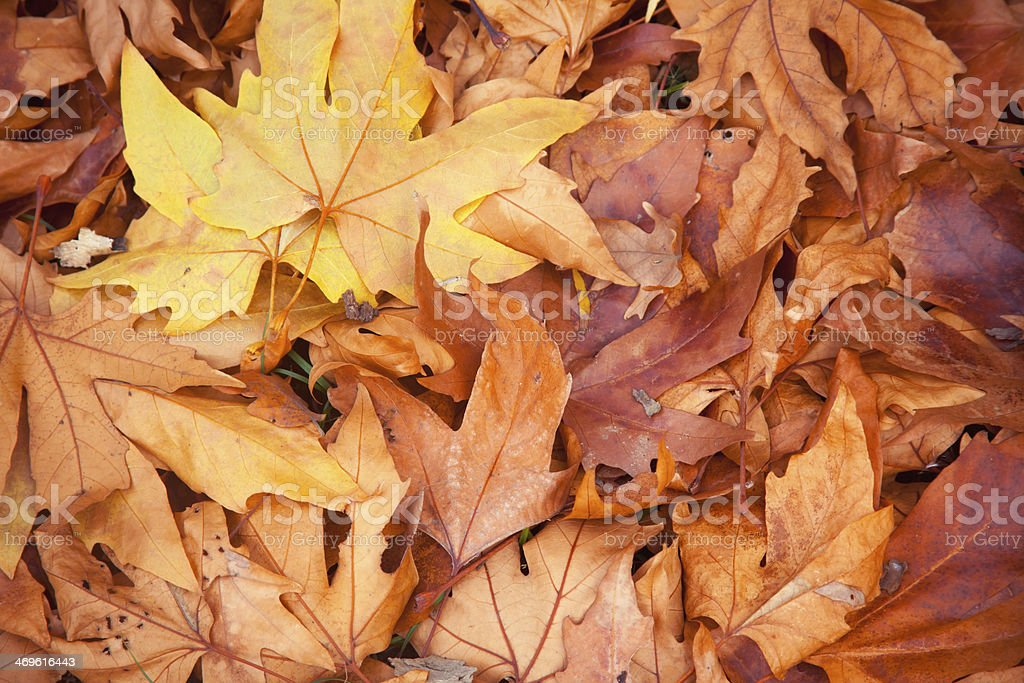 Autumn Leafs Background royalty-free stock photo