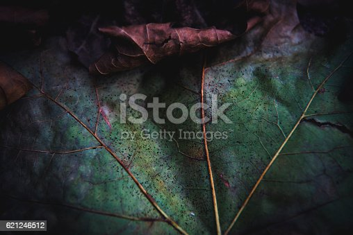 Macro photo of autumn leafs.