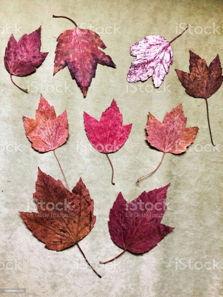 Sonbahar Leafs yeşil stok fotoğrafı