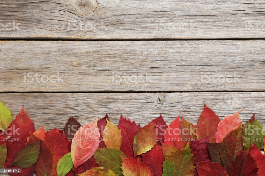 Autumn leafs on grey wooden table royalty-free stock photo