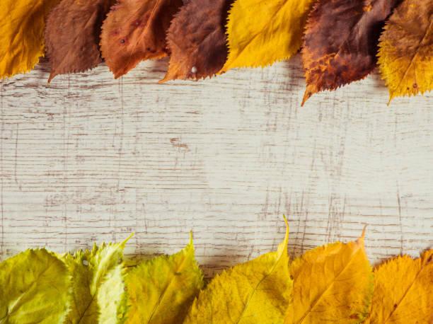 autumn leafs over vintage wood stock photo