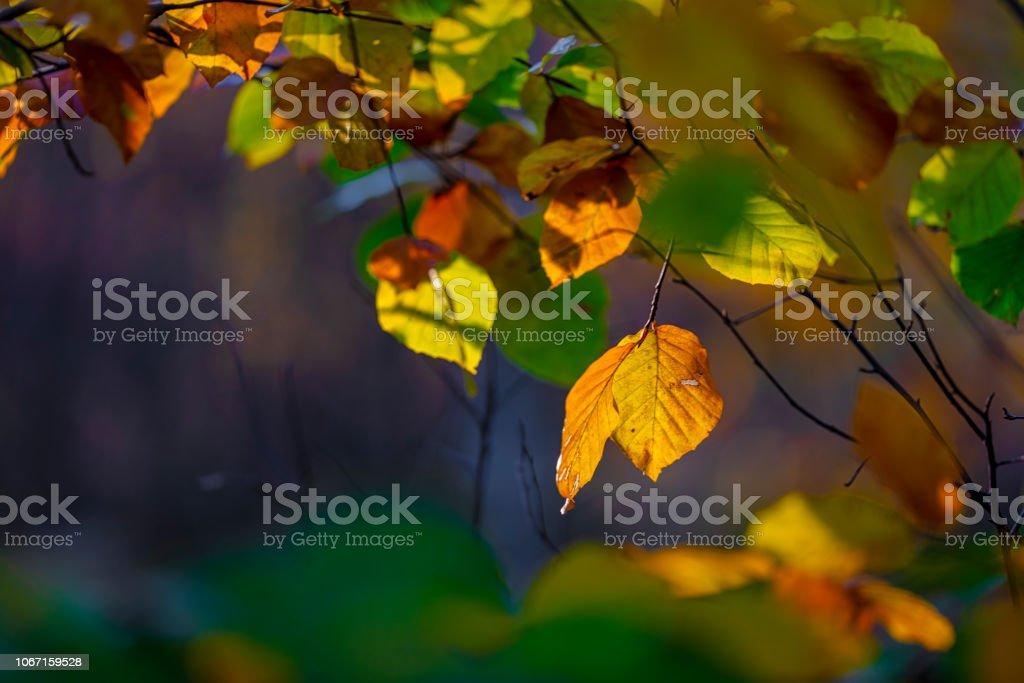 Hösten blad bildbanksfoto