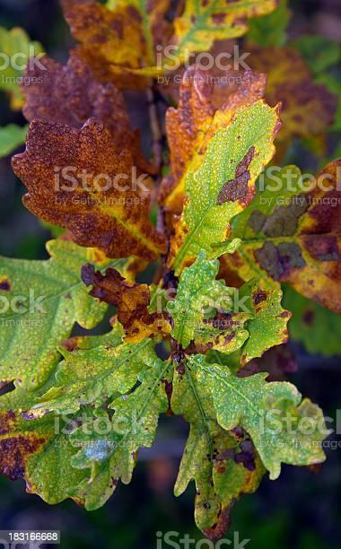Photo of autumn leafs