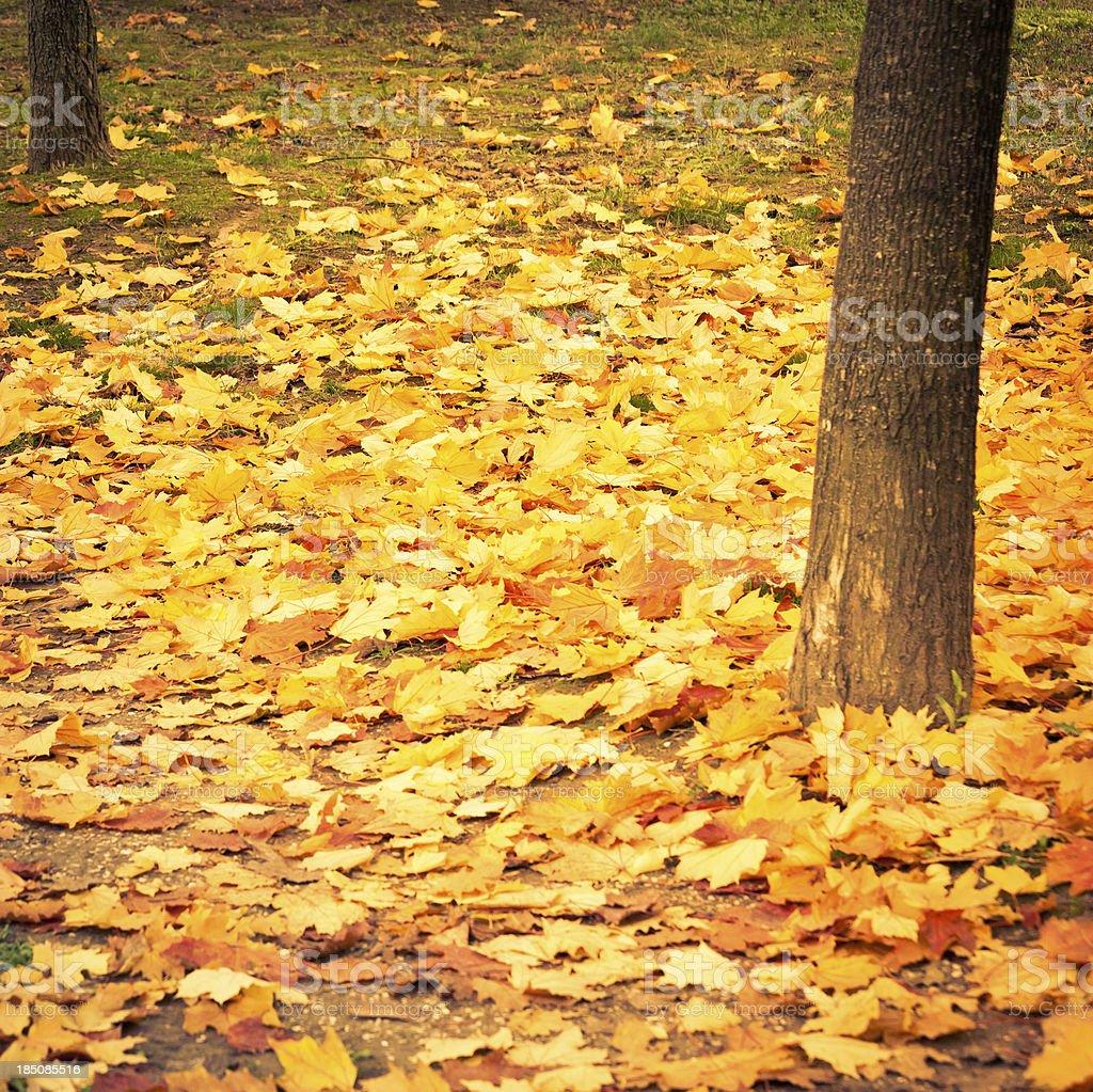 Herbst leafs – Foto