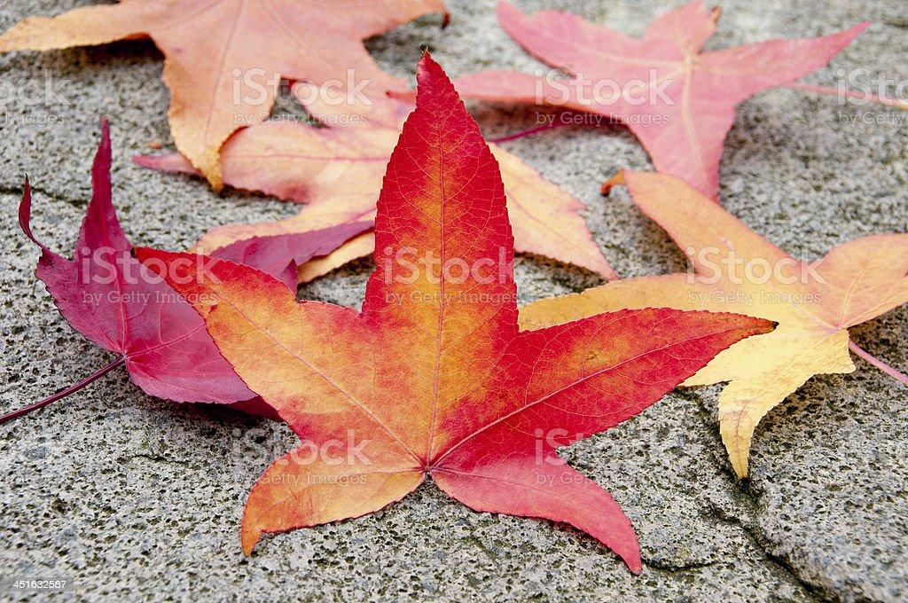 Autumn leafs royalty-free stock photo