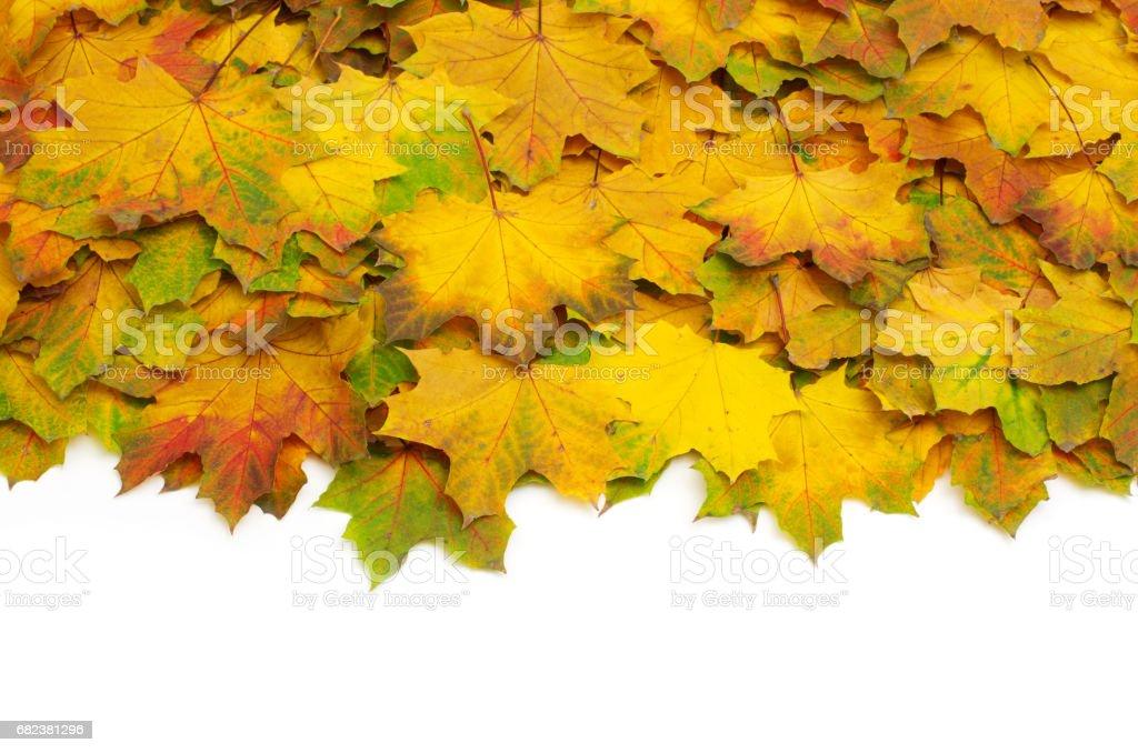 autumn leafs photo libre de droits