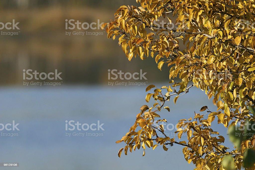 추절 leafs royalty-free 스톡 사진