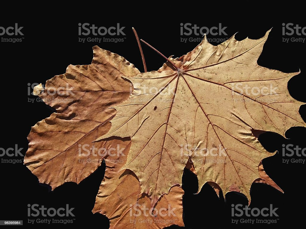 Autunno Leav foto stock royalty-free