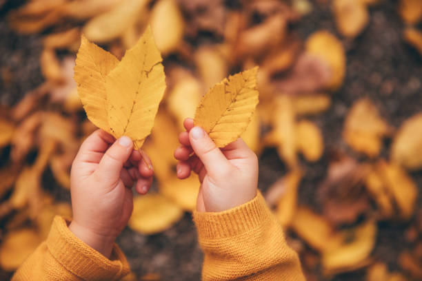 autumn leave in little boy´s hand, selective focus stock photo