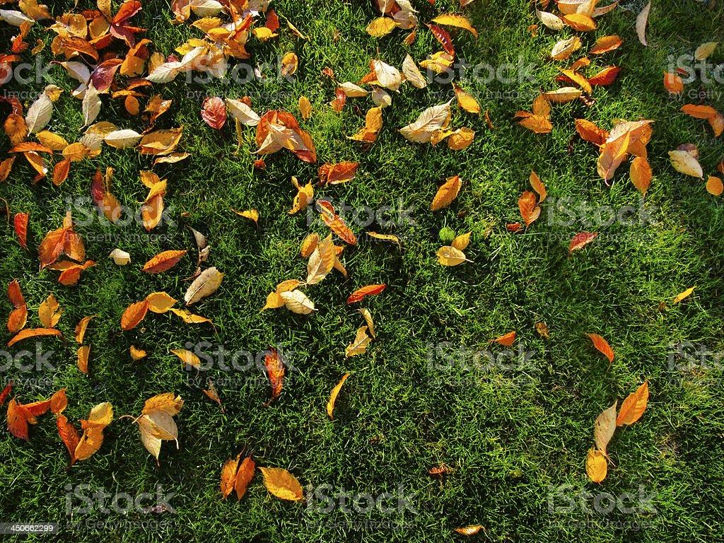 Herbst Sie auf grünem Gras – Foto