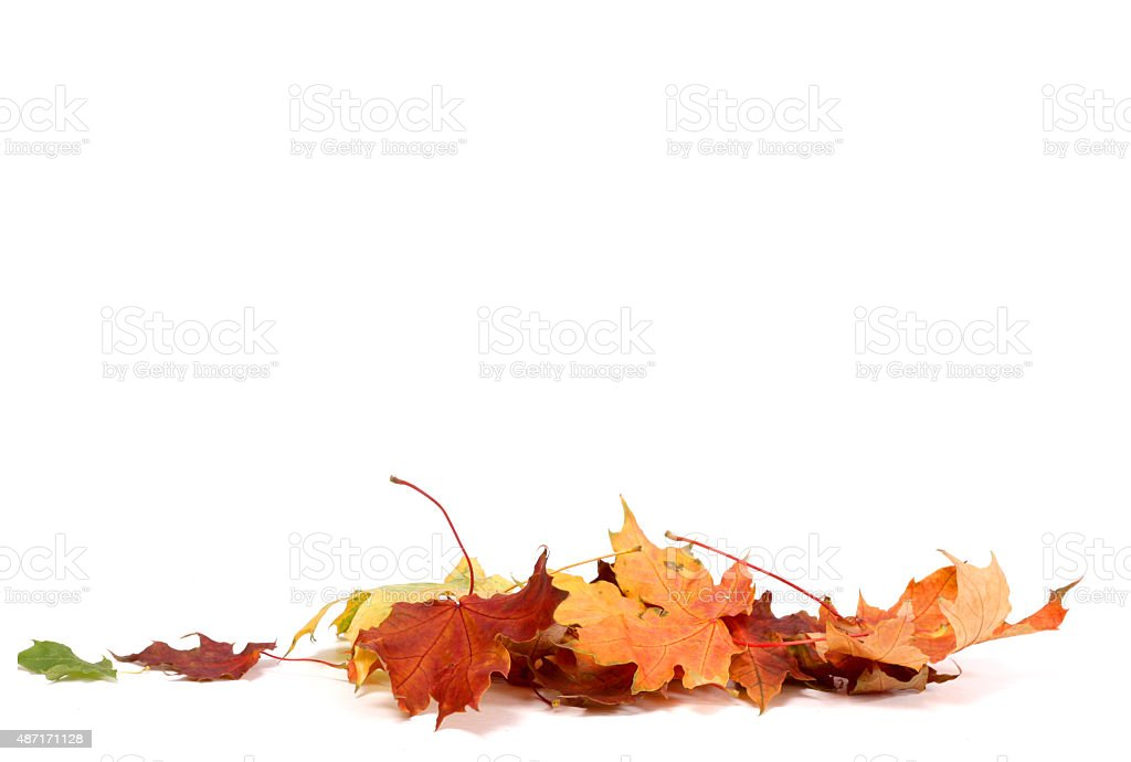 Autumn Leave stock photo