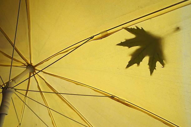 autumn leave, rain drops on umbrella - adomer stok fotoğraflar ve resimler