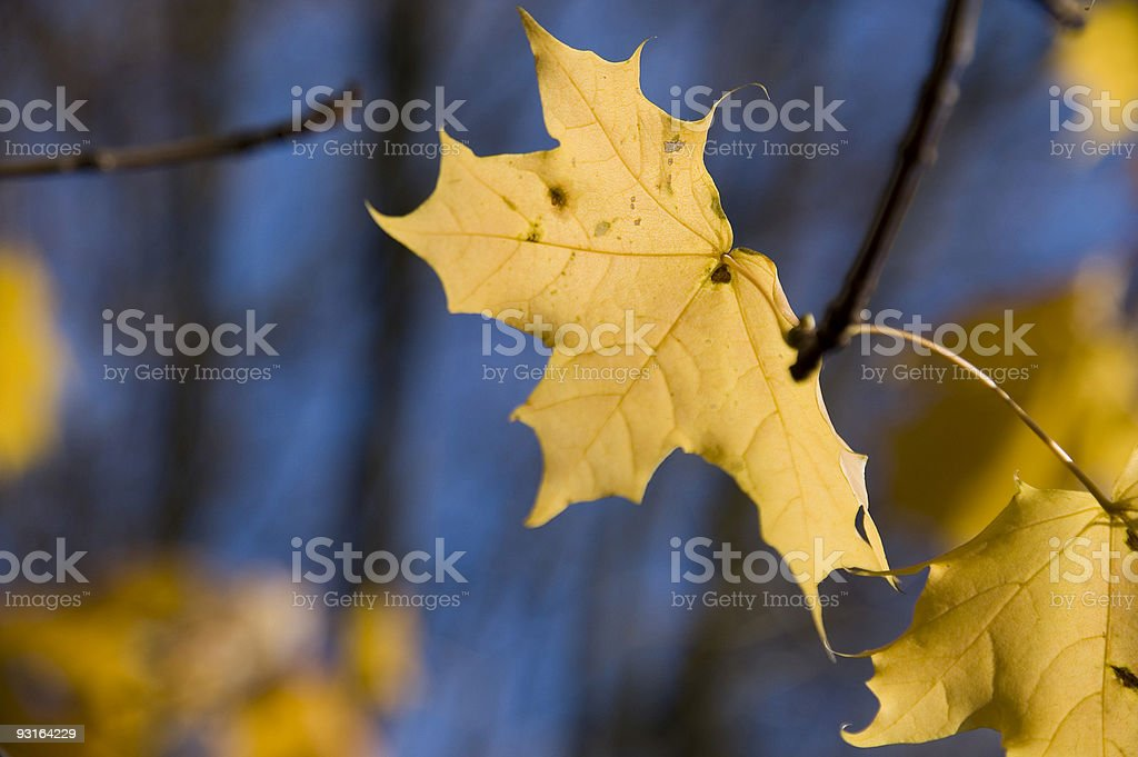 autumn leaves 1 stock photo