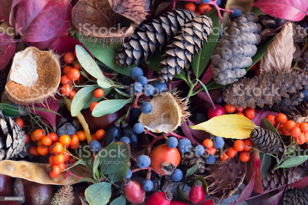Autumn Leaves, Acorns, Rowan Berries,Chestnut and Rosehip Composition. Autumn Background. stock photo