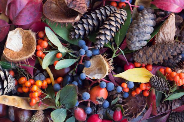herbstblätter, eicheln, vogelbeeren, kastanien und hagebutten zusammensetzung. herbst-hintergrund. - nussbaumholz stock-fotos und bilder