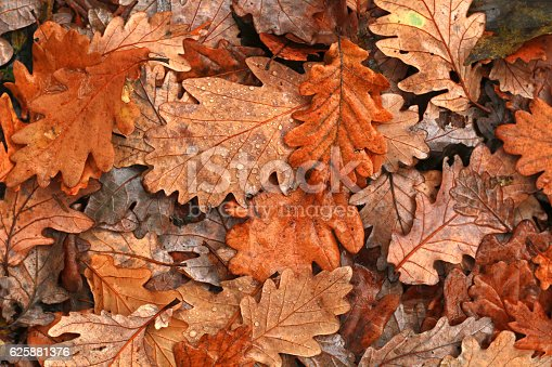 istock Autumn leaves after rain 625881376