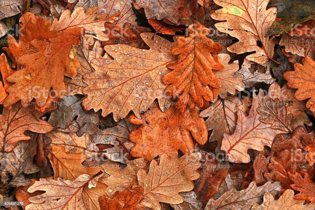 Autumn leaves after rain - foto stock
