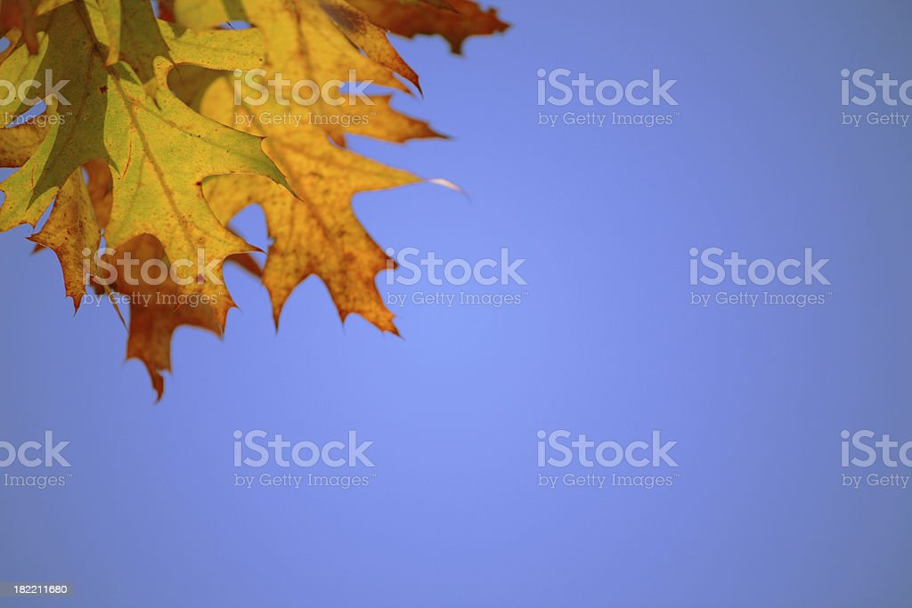 Autumn leaves against blue sky stock photo