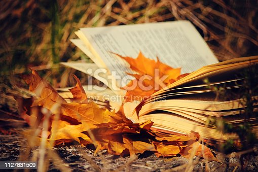 istock Autumn leaves and a book. Selective focus. 1127831509