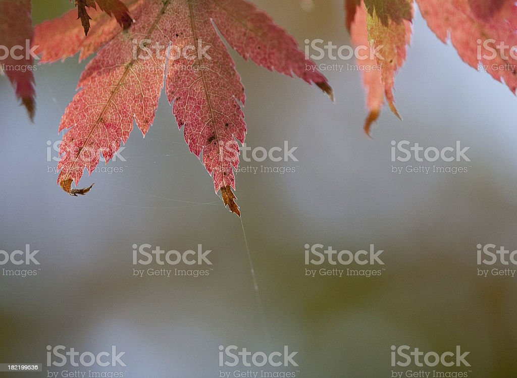 Autumn Leaves and a spider web stock photo