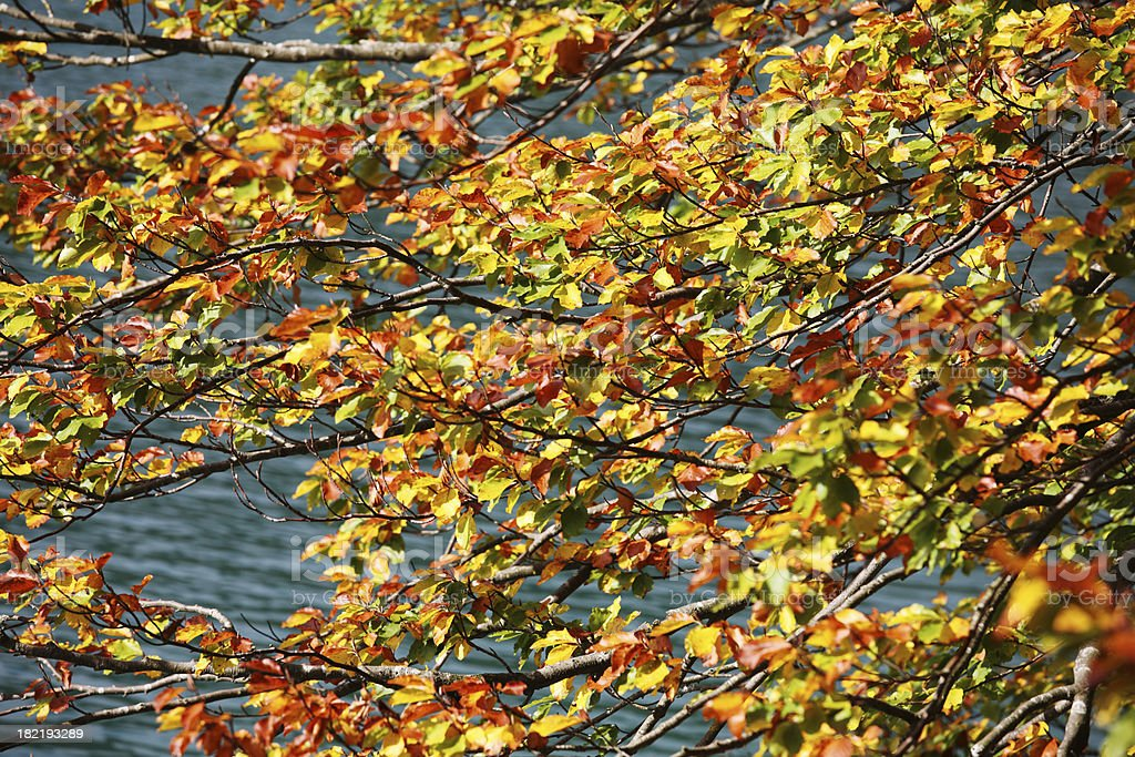 Autumn leaves and lake stock photo
