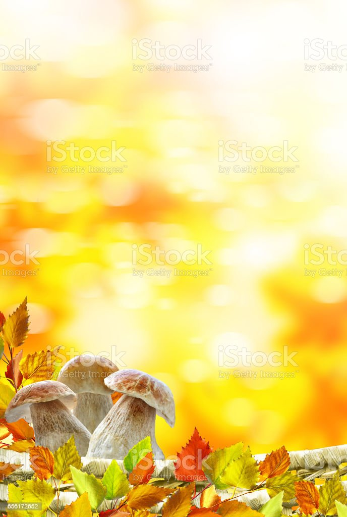 autumn leaves and mushrooms boletus stock photo