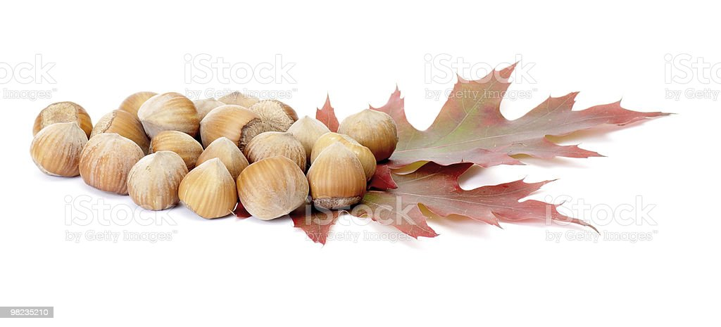 Autumn leaves and nuts on a white. royalty-free stock photo