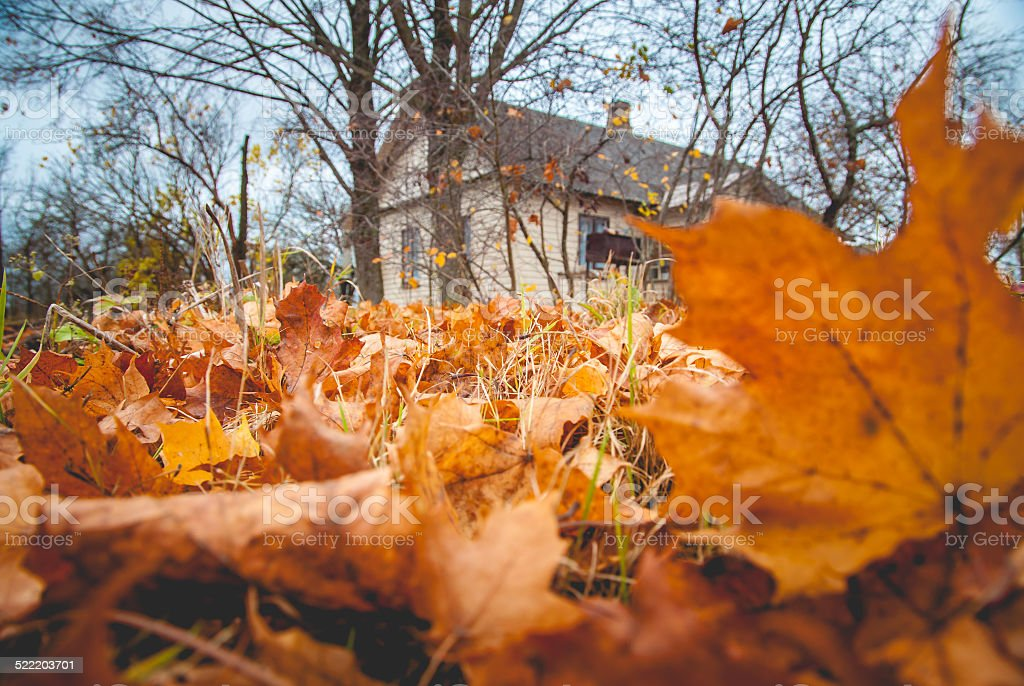 Autumn leaves and old house in Latvia stock photo