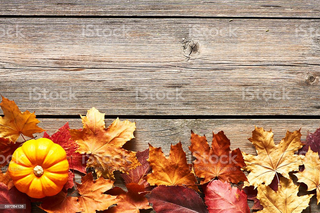 Autumn leaves and pumpkin stock photo