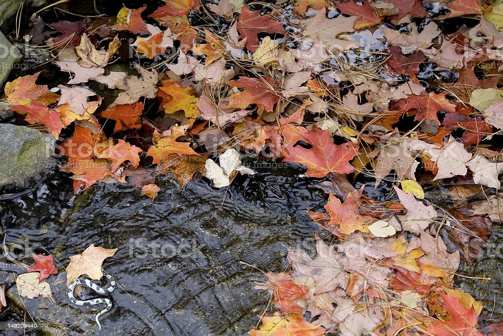 Autumn Leaves and Snake! royalty-free stock photo