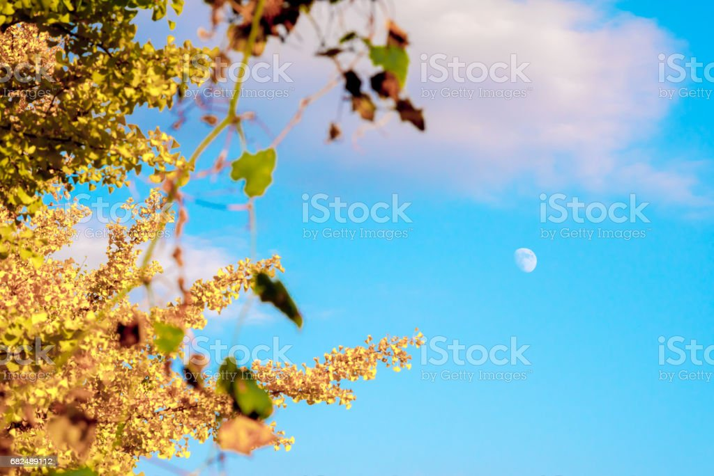 Autumn leaves and the moon royalty-free stock photo