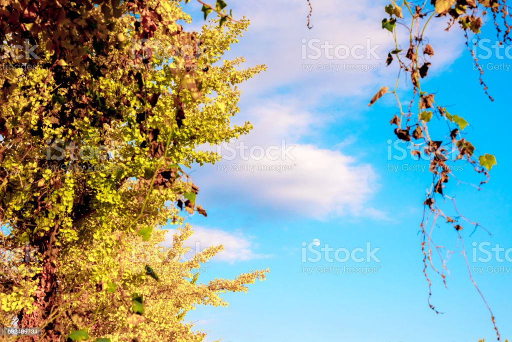 Autumn leaves and the moon foto stock royalty-free