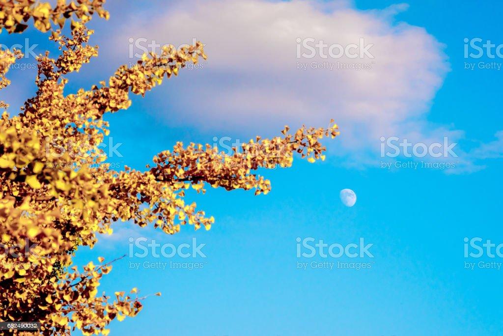 Herbst Blätter und Mondpyramide Lizenzfreies stock-foto