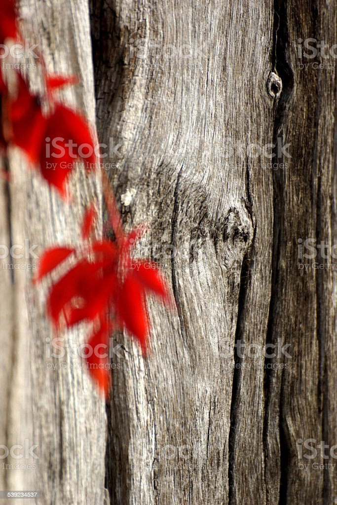 Autumn leaves and wooden beams royalty-free stock photo