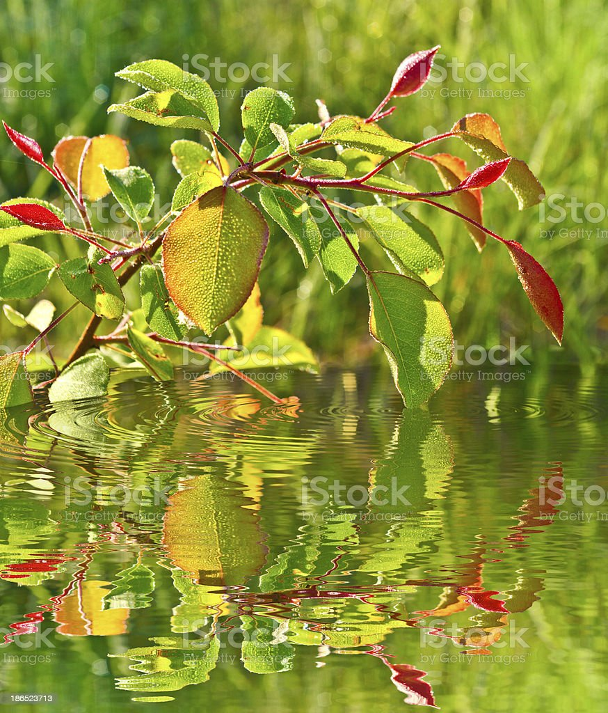 Autumn leaves are reflected in the water . royalty-free stock photo