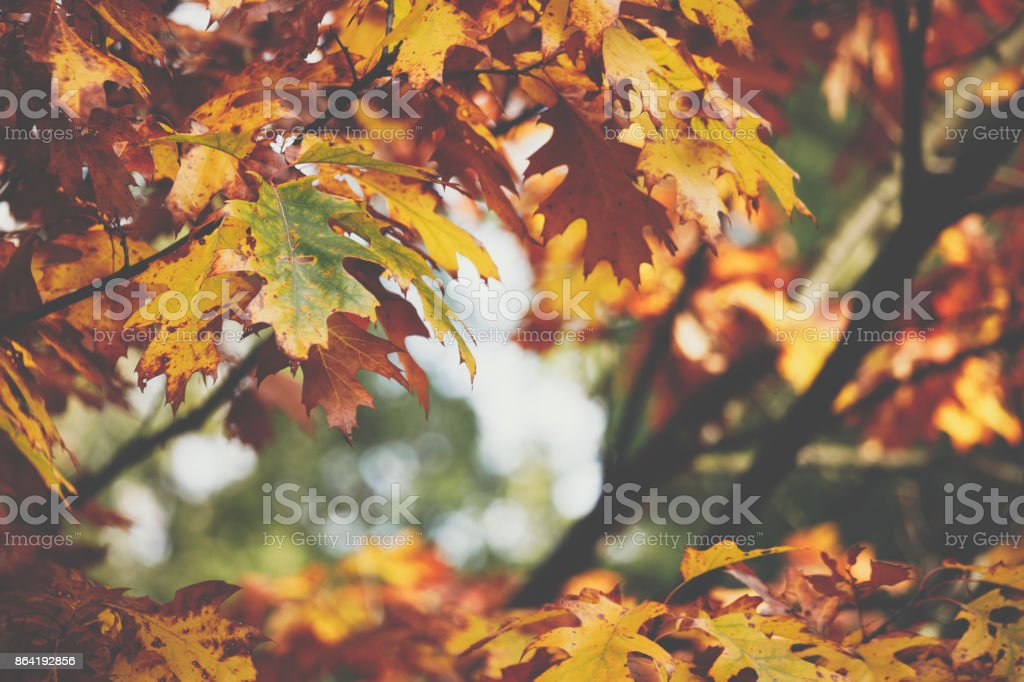 Autumn leaves background in autumn park. Nature frame. royalty-free stock photo