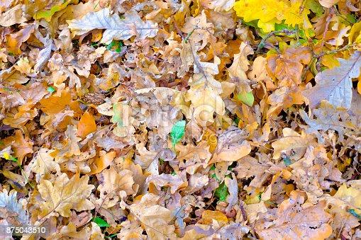 istock Autumn leaves background in autumn park 875043510