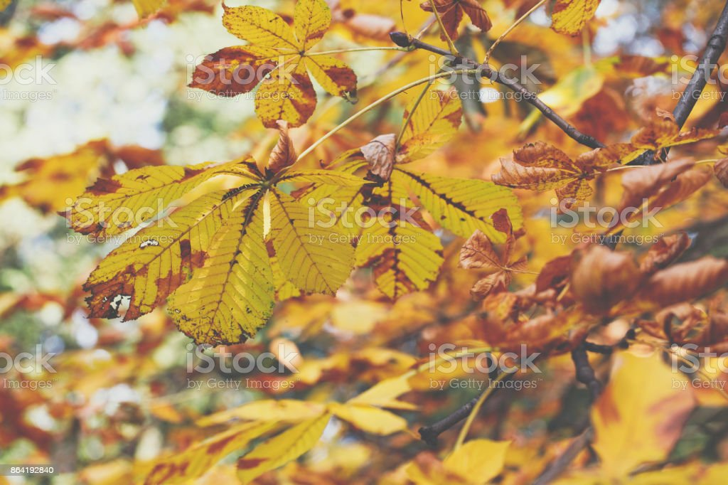Autumn leaves background in park. Nature frame. royalty-free stock photo