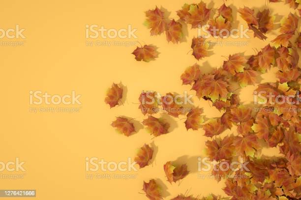 Photo of Autumn leaves background