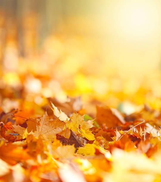 folhas de outono fundo - setembro amarelo - fotografias e filmes do acervo